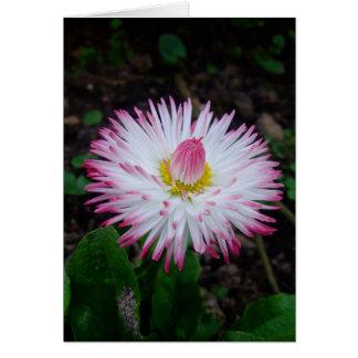 000011 - Margarida cor-de-rosa Cartoes