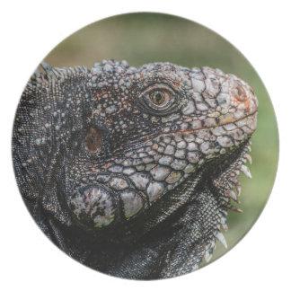 1920px-Iguanidae_head_from_Venezuela Louças De Jantar