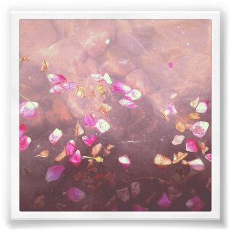 """4"""" x 4"""" impressão de Instagram: Pétalas da flor na Fotografias"""