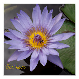 A abelha tem o poster