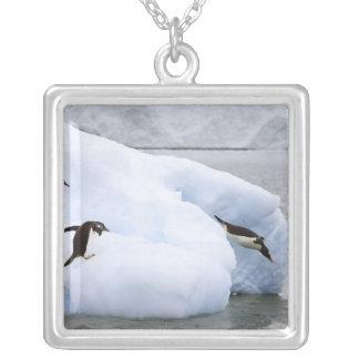 A Antártica, porto de Neko. Um pinguim do gentoo Colar Banhado A Prata