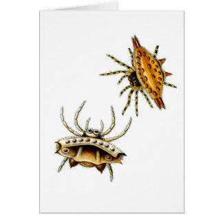 A aranha do caranguejo e o esfera-tecelão cartão