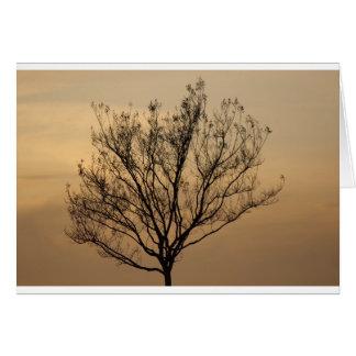 A árvore cartoes