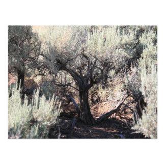 A árvore cartão postal