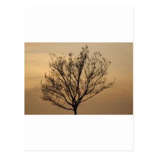 A árvore cartões postais