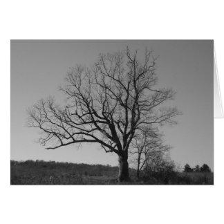 A árvore de diabo de New-jersey Cartão Comemorativo