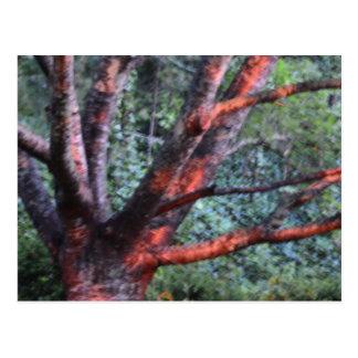 A árvore de escalada cartão postal