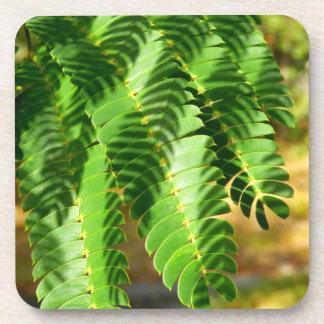 A árvore de seda persa sae de portas copos porta-copos
