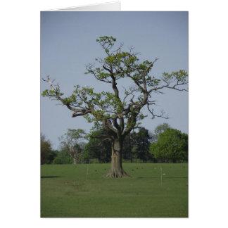 A árvore só cartão