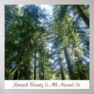 A beleza natural é toda em torno de nós pôsteres