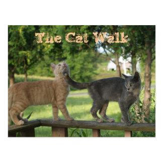 A caminhada de gato cartão postal