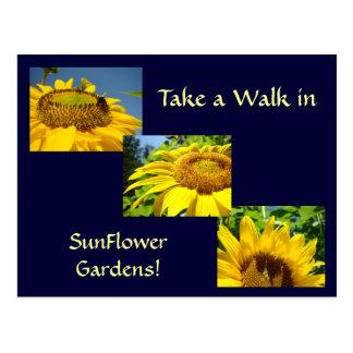 A caminhada no girassol jardina flores de Sun dos  Cartões Postais