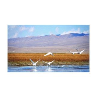 A cisne do vôo esticou o impressão das canvas