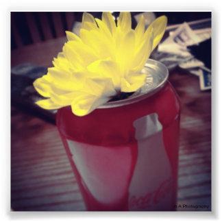 A flor pode dentro fotografias