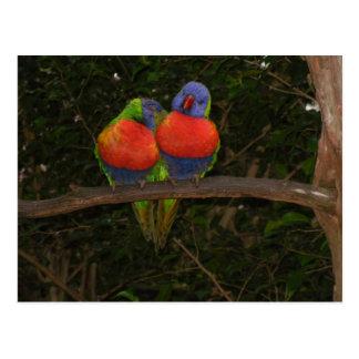 A foto e o cartão do pássaro do amor por Lorette S Cartao Postal
