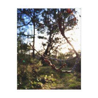 A fotografia brilhante dos Cobwebs - por E.V Impressão Em Tela