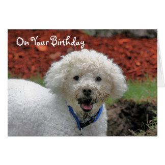 A lama enfrentou o cartão de aniversário do cão de