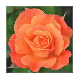 A laranja bonita aumentou impressão de canvas esticada