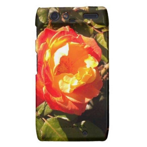 A laranja bonita aumentou droid RAZR capas