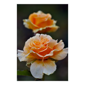 A laranja bonita aumentou impressão