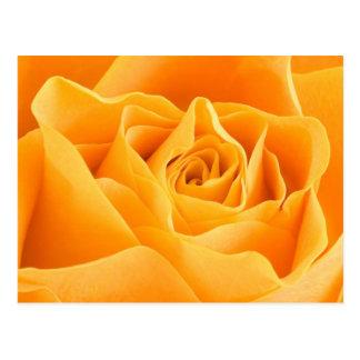 A laranja elegante aumentou cartão postal
