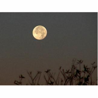 A lua em Nigh cronometra Esculturafotos