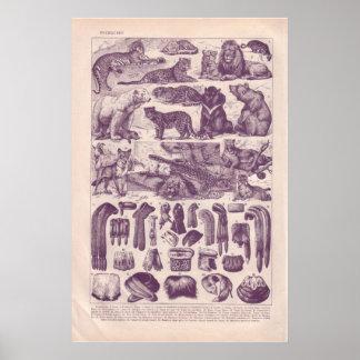 A pele 1920 histórica do vintage cobriu animais e  impressão