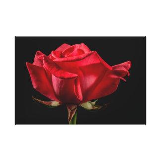 """A rosa vermelha no preto envolveu 24"""" x 16"""" impres impressão de canvas envolvidas"""
