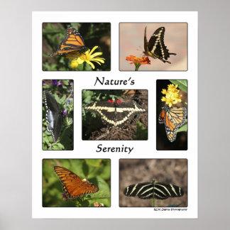 A serenidade da natureza poster