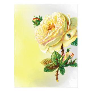 Abra o rosa amarelo cartão postal