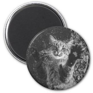 Abraço preto e branco bonito do gato ímã redondo 5.08cm