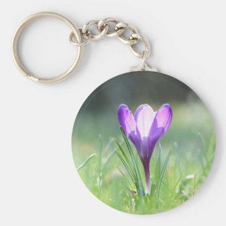 Açafrão roxo no primavera chaveiro