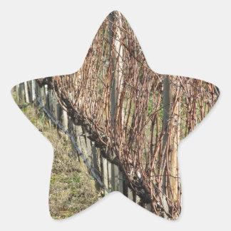 Adesito Estrela Campo desencapado do vinhedo no inverno. Toscânia,