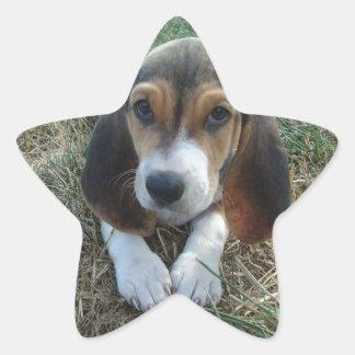 Adesito Estrela Cão de filhote de cachorro de Artésien Normand do