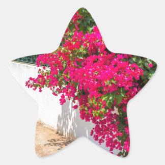 Adesito Estrela Flores vermelhas de bougainville que florescem em