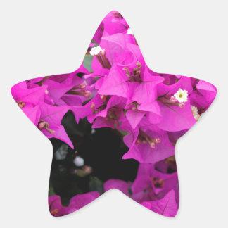 Adesito Estrela Fundo fúcsia roxo do Bougainvillea