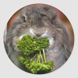 Adesivo Andora o coelho: Ataque da salsa