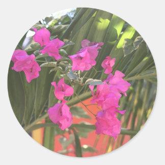 Adesivo Bougainvillea brilhante