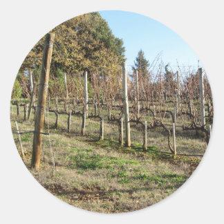 Adesivo Campo desencapado do vinhedo no inverno. Toscânia,