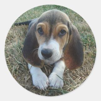 Adesivo Cão de filhote de cachorro de Artésien Normand do