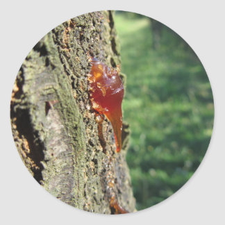 Adesivo Close up da excreção da árvore de pera da resina