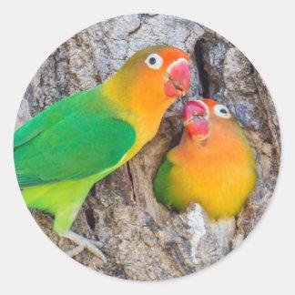 Adesivo Companheiros do Lovebird de Fischer