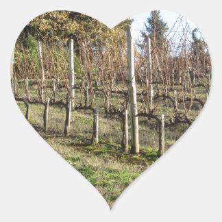 Adesivo Coração Campo desencapado do vinhedo no inverno. Toscânia,