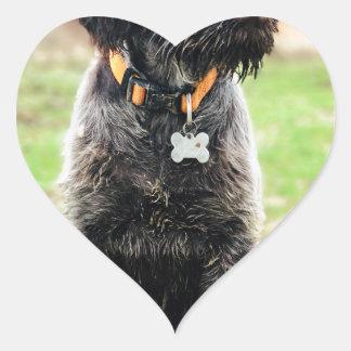 Adesivo Coração Filhote de cachorro apontar Griffon Wirehaired