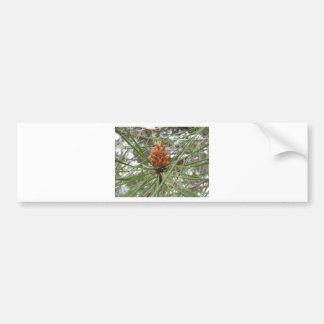 Adesivo De Para-choque Cones imaturos do homem ou do pólen do pinheiro