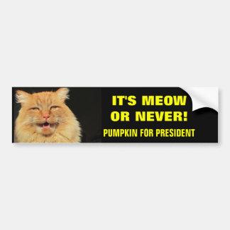 Adesivo De Para-choque É Meow ou nunca! Abóbora para o presidente