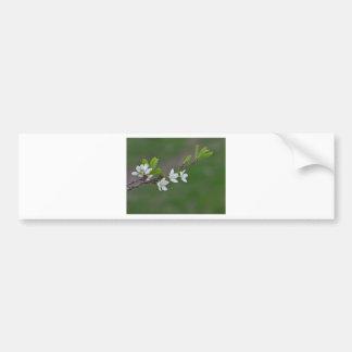 Adesivo De Para-choque Flores da árvore de cereja