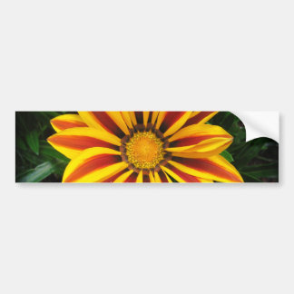Adesivo De Para-choque Foto alaranjada bonita da flor de Sun