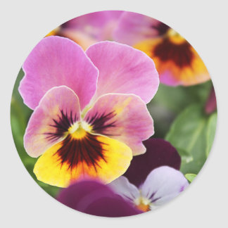 Adesivo Flor cor-de-rosa e amarela colorida do amor