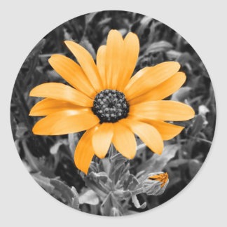 Adesivo Fotografia da margarida africana do flash do